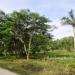 L141610BT_4 Acres Bullet Tree Road Belize2