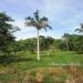 L141610BT_4 Acres Bullet Tree Road Belize3