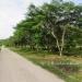 L141610BT_4 Acres Bullet Tree Road Belize4