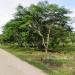 L141610BT_4 Acres Bullet Tree Road Belize5