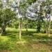 L141610BT_4 Acres Bullet Tree Road Belize7