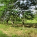 L141610BT_4 Acres Bullet Tree Road Belize8