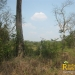 belize-real-estate_72-22-acres-in-branch-mouth-1