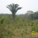 belize-real-estate_72-22-acres-in-branch-mouth-10