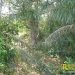 belize-real-estate_72-22-acres-in-branch-mouth-11