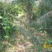 belize-real-estate_72-22-acres-in-branch-mouth-12