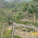 belize-real-estate_72-22-acres-in-branch-mouth-2
