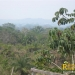 belize-real-estate_72-22-acres-in-branch-mouth-3