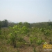 belize-real-estate_72-22-acres-in-branch-mouth-7