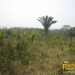 belize-real-estate_72-22-acres-in-branch-mouth-8