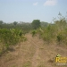 belize-real-estate_72-22-acres-in-branch-mouth-9