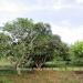 Belize Land 20 Acres near Belmopan Cayo District18
