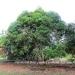 Belize Land 20 Acres near Belmopan Cayo District4