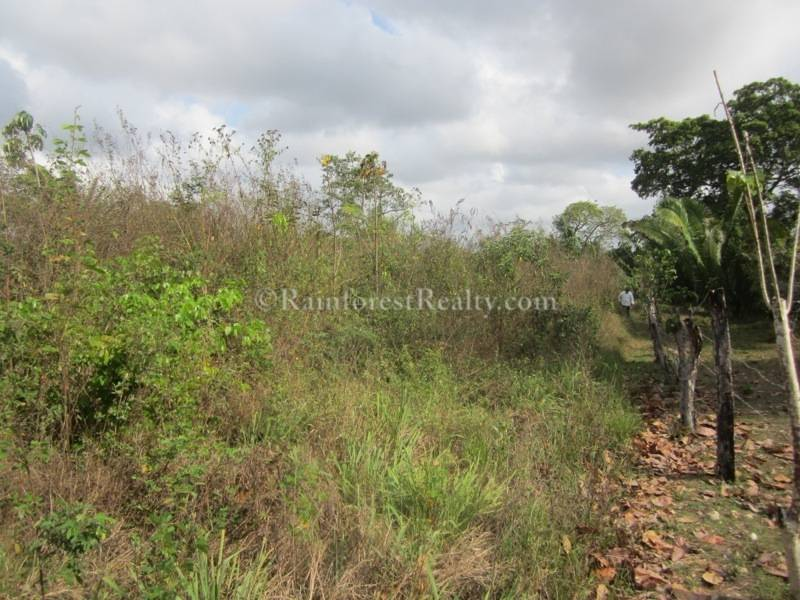 Belize 40 acres of farm land near Spanish Lookout