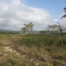Belize 20 Acres for Sale near Spanish Lookout 2.JPG