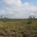 Belize 20 Acres for Sale near Spanish Lookout 5.JPG