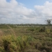 Belize 20 Acres for Sale near Spanish Lookout 7.JPG