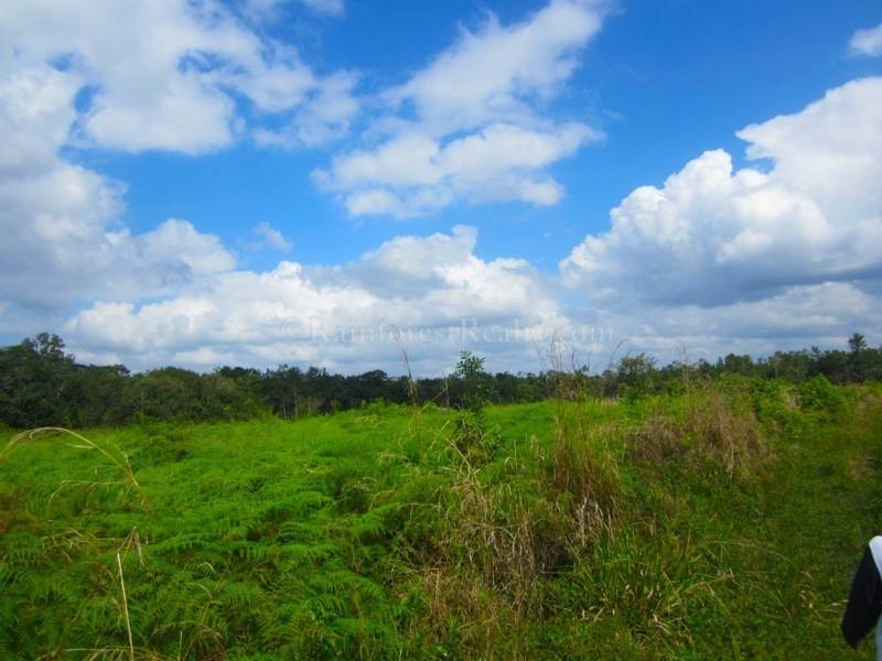 Belize Farm Land For Sale In Cayo Belize