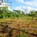 Residential Corner Lot for Sale in Cristo Rey Belize3