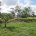 1.34 acres of sloping land in Belize for Sale14