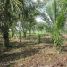 1.34 acres of sloping land in Belize for Sale2
