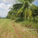 1.34 acres of sloping land in Belize for Sale8