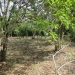 1.34 acres of sloping land in Belize for Sale9