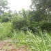 Belize-residential-commercial-lot-3