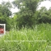 Belize-residential-commercial-lot-4