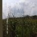 Belize-34.66-Acres-Iguana-Creek-Cayo2