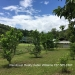 74.5 Acre Farm in Barton Creek, Cayo7