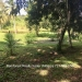 Belize-36-Acres-with-Home-11