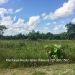 Belize-36-Acres-with-Home-43