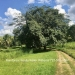 Belize-36-Acres-with-Home-6