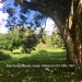 Belize-36-Acres-with-Home-8