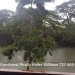Cabin Style Home on Belize River20