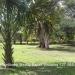 150Acre Tree Farm Los Tambos1
