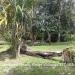 150Acre Tree Farm Los Tambos10