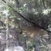 150Acre Tree Farm Los Tambos5