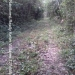 150Acre Tree Farm Los Tambos6