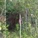 150Acre Tree Farm Los Tambos7