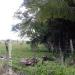 150Acre Tree Farm Los Tambos8