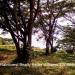 Five Belize Lots near San Ignacio Cayo Dis1
