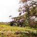 Five Belize Lots near San Ignacio Cayo Dis3