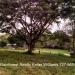 Five Belize Lots near San Ignacio Cayo Dis4