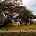 Five Belize Lots near San Ignacio Cayo Dis5