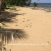 Riversdale Oceanfront Lot Placencia7