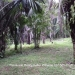 51.83 Acres Jungle Property Teakettle1