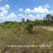 51.83 Acres Jungle Property Teakettle2