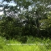 51.83 Acres Jungle Property Teakettle3